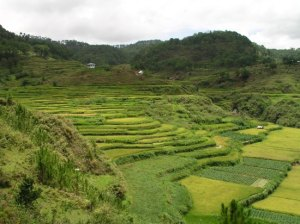 Though Banaue isn't far away their terraces were sculpted from dirt.  The Sagada terraces were developed from rock.